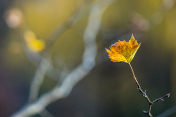 Golden leaf! - image #407375 gratis