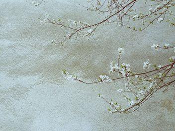 Springtime - Free image #411875