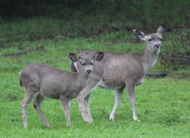Rain deer - image gratuit #413285