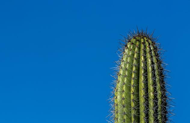 One cactus - Free image #413395