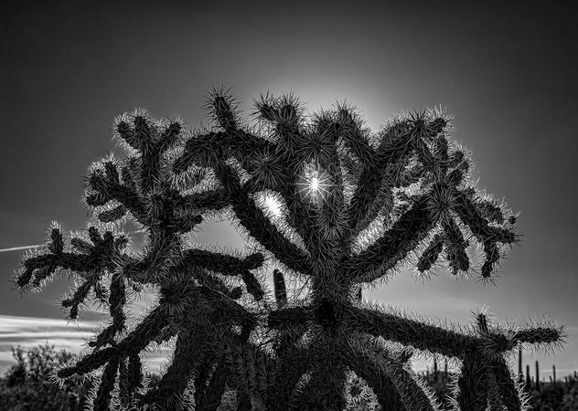 Sun and cactus spines - Free image #414015