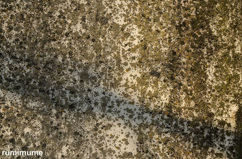 Free texture for your project - image gratuit #414575