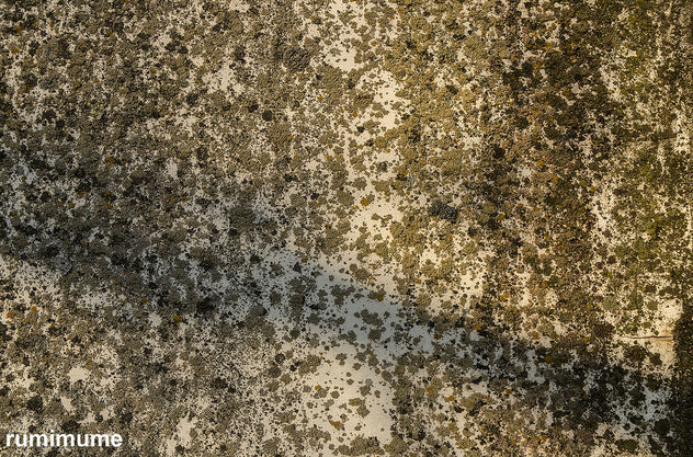 Free texture for your project - image #414575 gratis