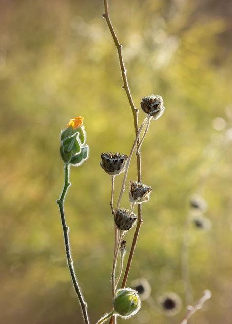 Desert Flower.jpg - Free image #414615