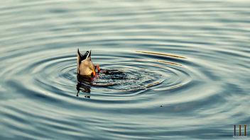 Bottoms Up! - Free image #415065