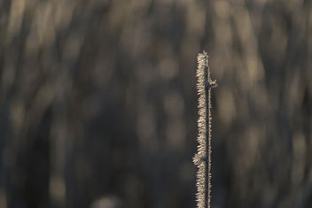 Needles - бесплатный image #416435