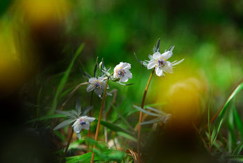 beauty in the thicket - image gratuit #417755