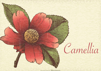 Free Retro Camellia Vector Illustration - Kostenloses vector #418975