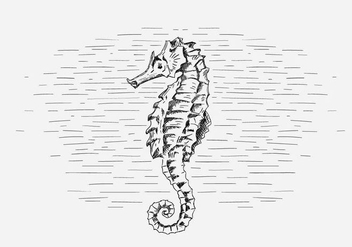 Free Vector Seahorse Illustration - Free vector #419035