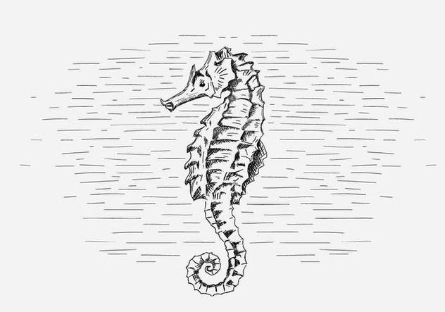 Free Vector Seahorse Illustration - Free vector #419035