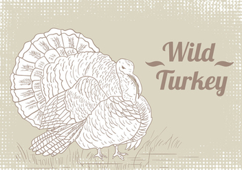 Wild Turkey Drawing Vector - Free vector #420045