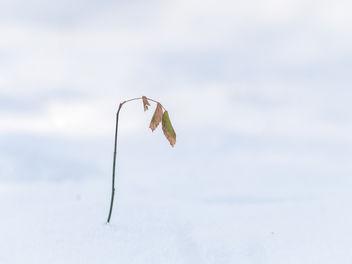 Good bye winter - Free image #421225