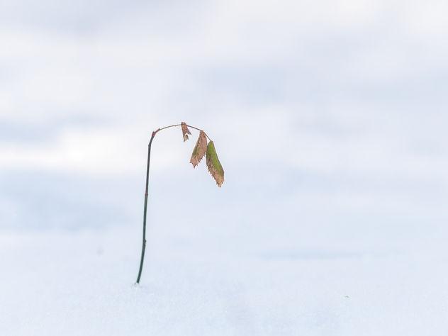 Good bye winter - image gratuit #421225