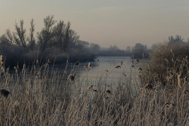 Kikvorschkil, Biesbosch, Dordrecht - image gratuit #421245