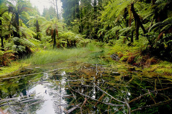 Natures Detritus - Free image #421255