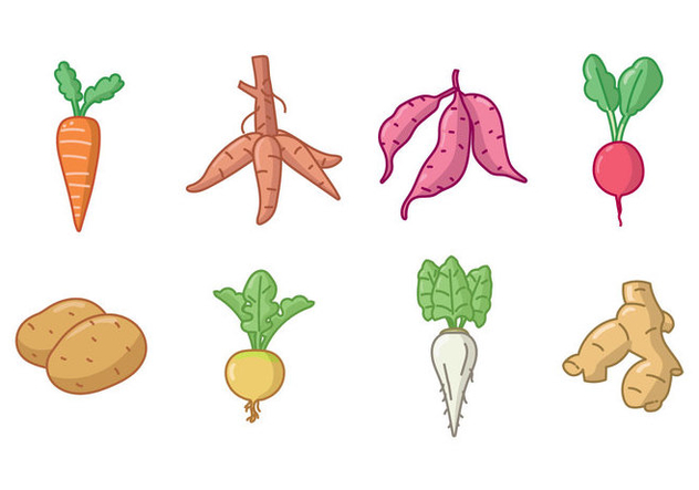 Handdrawn Root and Tuber Crops Icon Set - Free vector #422515