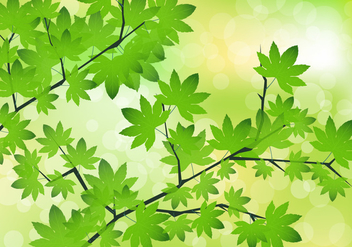 Green Maple Leaves Vector - vector gratuit #424325