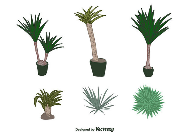 Yucca Plant Vector - Free vector #427755