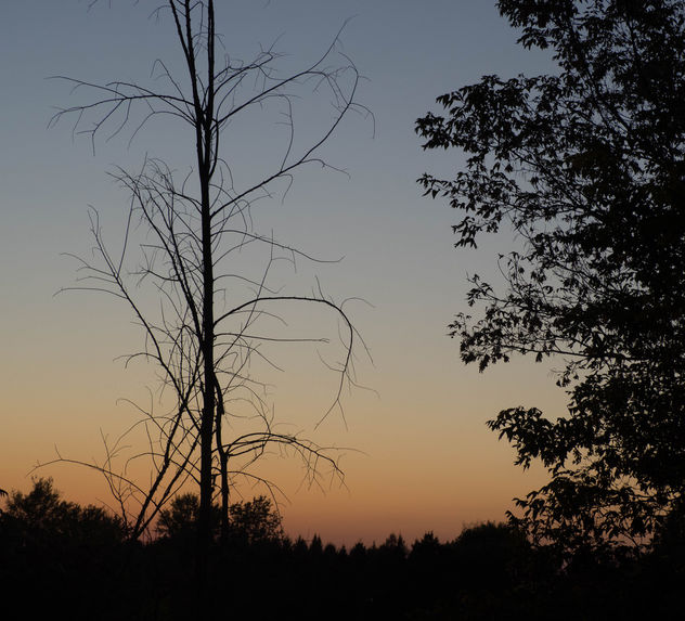 A tree - image #427915 gratis