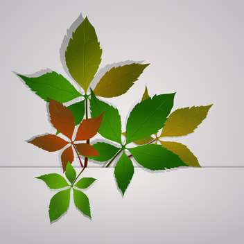 vector wild grape foliage - Free vector #130315