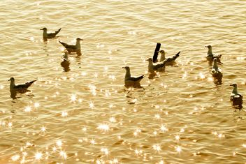 Crowd of seagull floating in the sea - image #136325 gratis