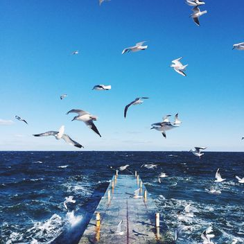 Seagulls flying over the sea - image #136415 gratis