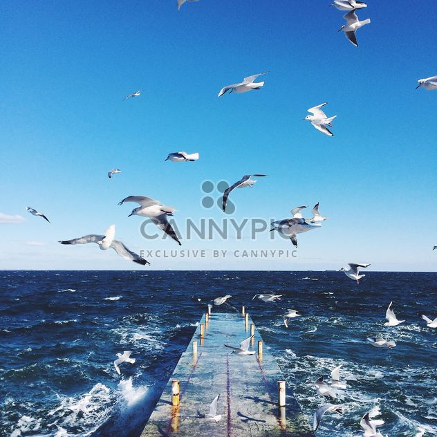 Seagulls flying over the sea - Free image #136415