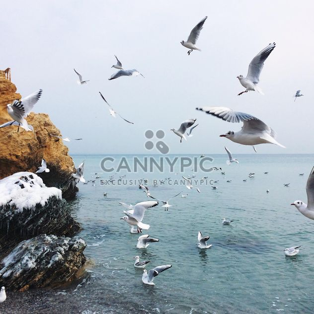 Seagulls flying over sea - Free image #136505