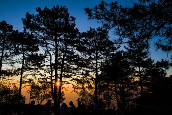Sunset in forest - image gratuit #142115