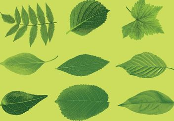 Realistic Leaves Vectors - Free vector #145875