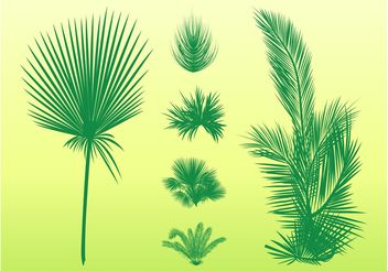 Palm Leaves Set - бесплатный vector #146045