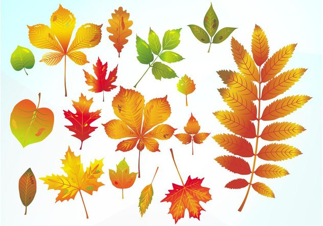 Autumn Vector Leaves - Free vector #146385