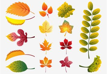 Fall Leaves Vector - Free vector #146405
