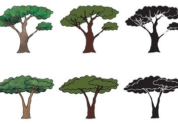 Free Acacia Tree Vector Series - бесплатный vector #152855