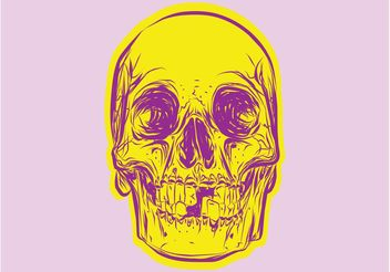 Colorful Skull - vector gratuit #156875