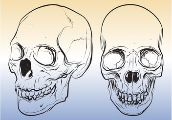 Skull Sketches - vector gratuit #157105