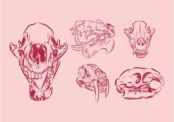 Animal Skulls - vector gratuit #157165