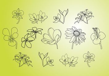 Vector Flower Illustrations - Free vector #157245