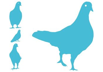 Pigeon Silhouettes - Kostenloses vector #157765