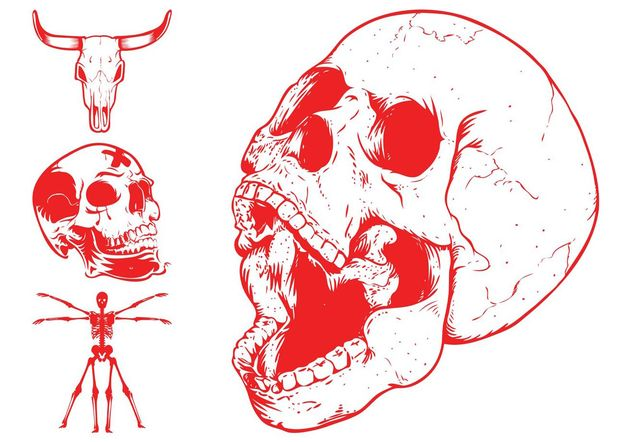 Skulls And Skeleton - vector gratuit #158695