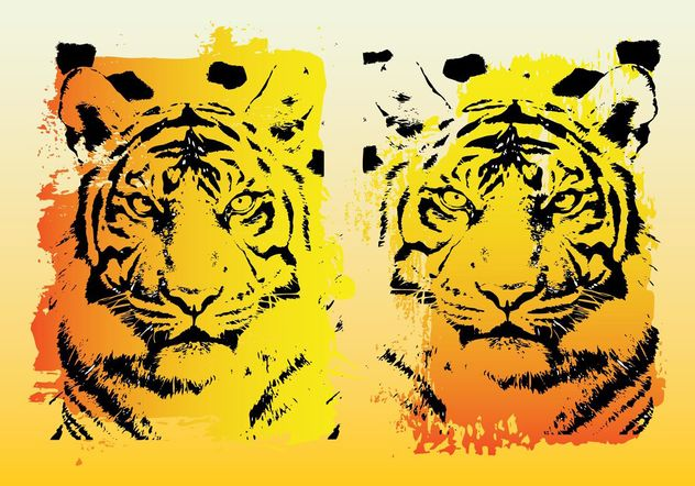 Tigers Vector Graphics - Free vector #160115
