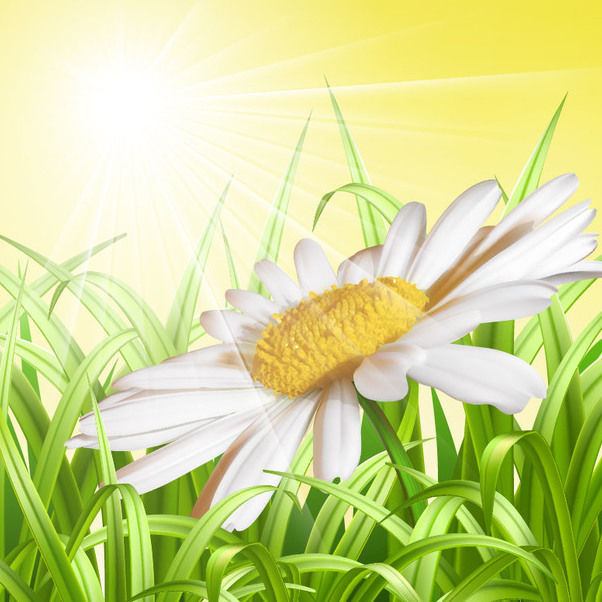 Detailed Daisy Floral Sunny Background - Free vector #167815
