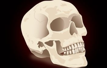 Realistic Skull for Halloween - vector gratuit #173785
