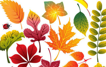 Autumn Leaves 2 - vector gratuit #175465