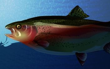Trout - Free vector #177655
