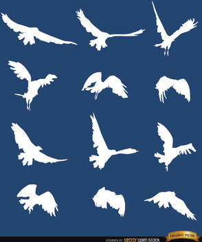 Flying bird sequence silhouettes - vector gratuit #181265