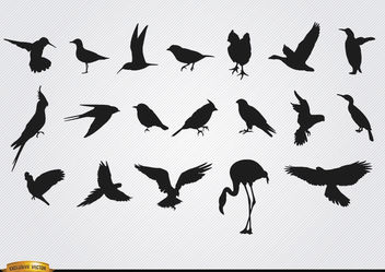 Species of birds silhouettes set - vector gratuit #181285