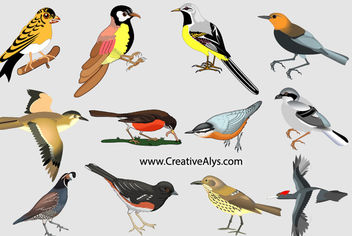 Realistic Colorful Bird Pack - vector gratuit #181305