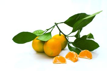 Branch of tangerines with leaves - бесплатный image #182595