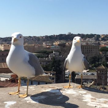 seagulls on roof - image gratuit #183095